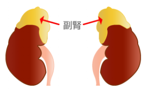 adrenal_gland_img