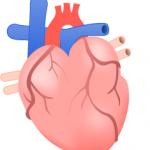 ペニス増大サプリメントは心臓に悪くないの?